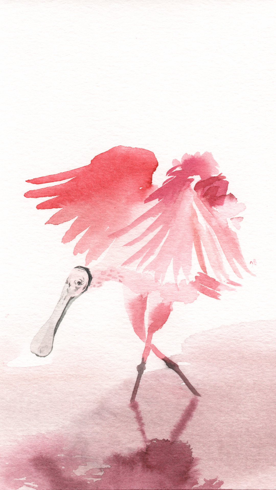 Roseate spoonbill watercolour illustration
